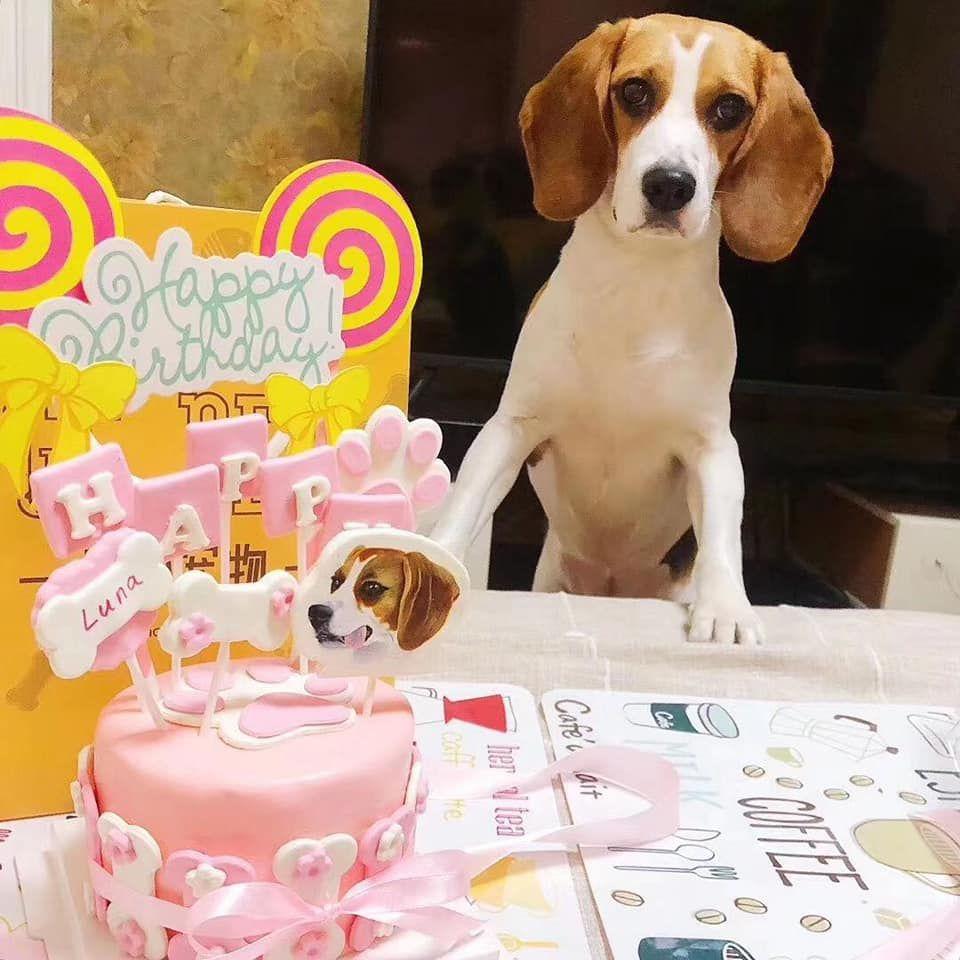 【呀咪呀咪】寵物蛋糕.毛小孩可以吃的蛋糕.還有專屬Q版頭像製作